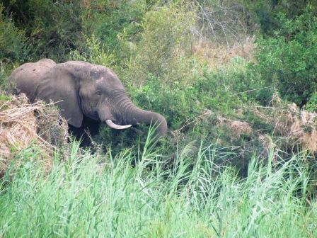 FUN ON THE OLIFANTS RIVER!